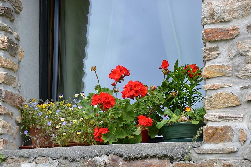 Waarom Jan Terlouw niet achter die geraniums terecht komt